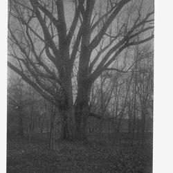 10 Double Tree-1.jpg