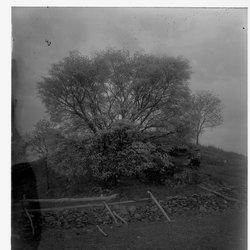 12 Willows-1.jpg