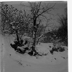 14 Snow Scene Mooney-1.jpg