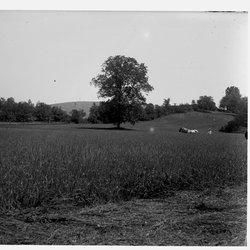 14 Unknown Meadow-1.jpg