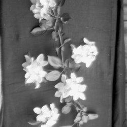 18 Apple Blossom-1.jpg
