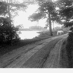 18 Spring Lake with Horse-1.jpg