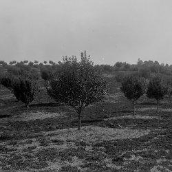 20 Orchard-1.jpg