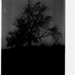 2 Apple Trees-1.jpg