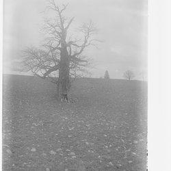 3 Tree-1.jpg