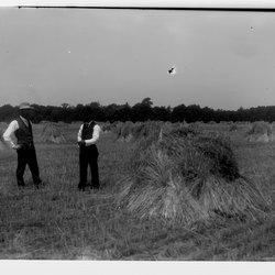 5 Eltings Rye Fields-1.jpg