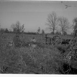 8 Corn Fields-1.jpg