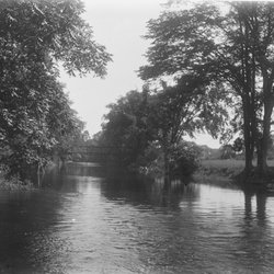 8 Roe Jan woods North of Bridge looking South-1.jpg